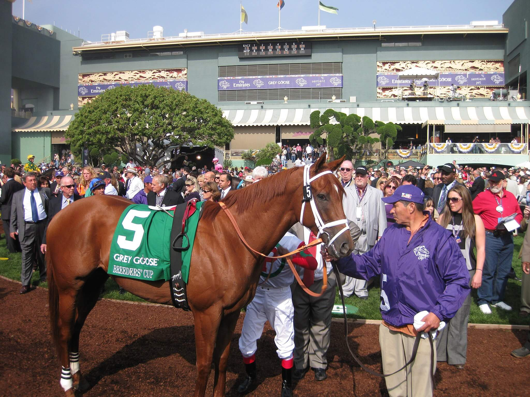 Breeders Cup Handicapping Made Simple Juvenile Turf Races